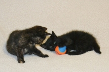 Maddie&Merlin small (5)